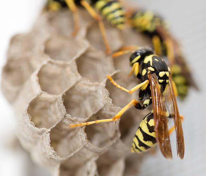 clenix oy ampiaisten hävitys