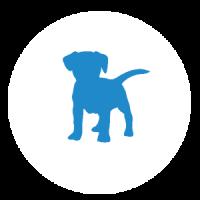 clenix kotisiivoukset eläinkodeille